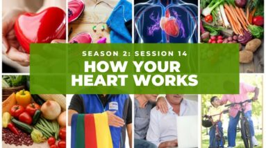 How Your Heart Works