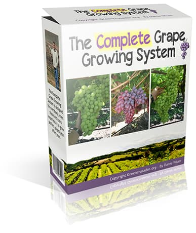 Tips On Growing Grapes