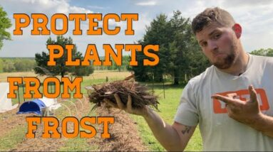 How to Protect Plants from Frost