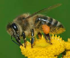 How To Treat Bee Or Wasp Sting